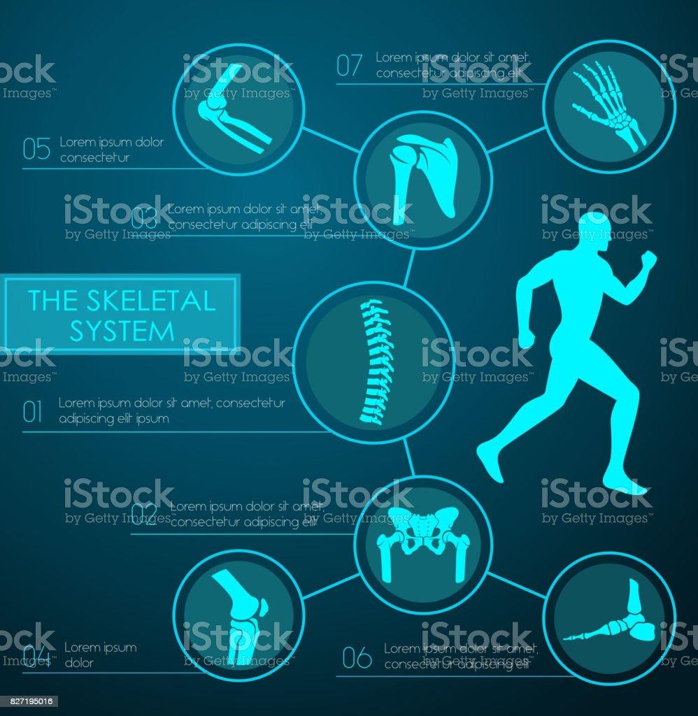 Medical infographic of human skeletal system vector art illustration