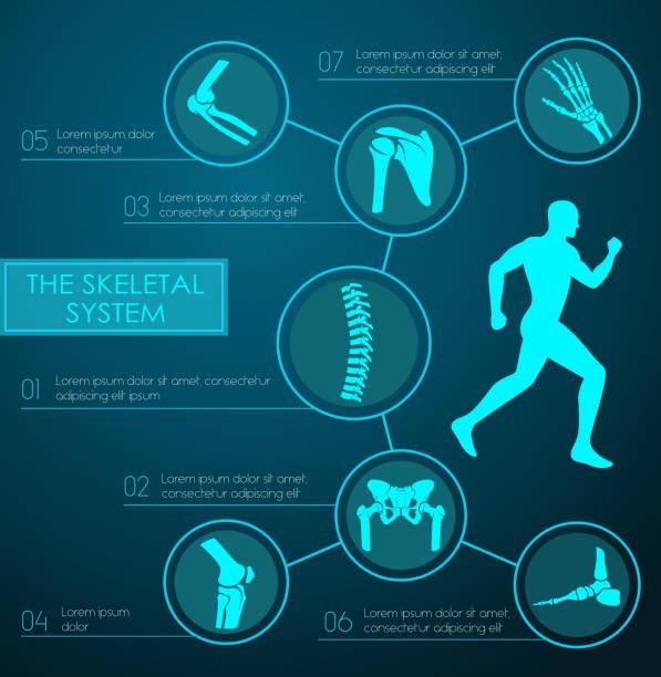 ilustrações, clipart, desenhos animados e ícones de infográfico de médico do sistema esquelético humano - ortopedia
