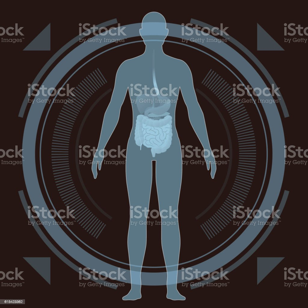 medical interface, human whole body and digestive organs vector art illustration