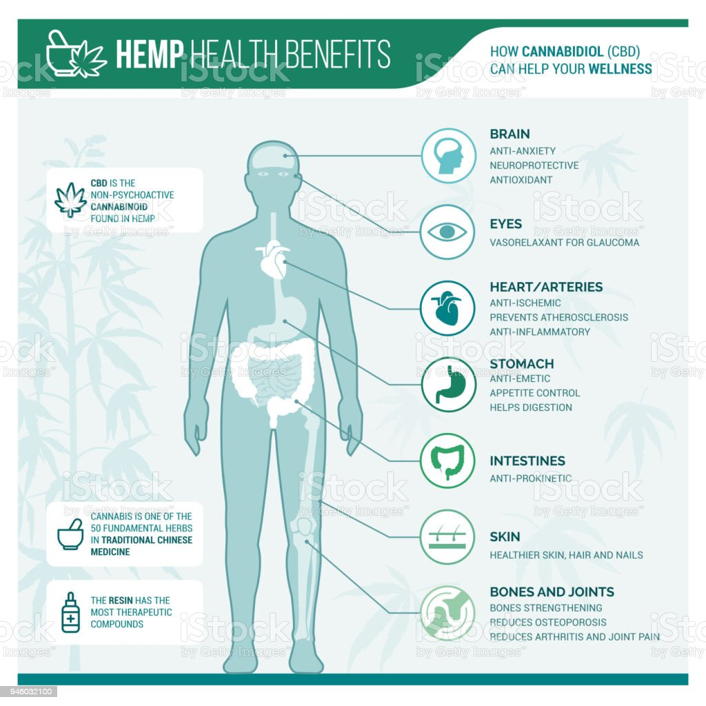 Medicinal hemp health benefits vector art illustration