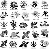 Single colour icons of herbs commonly used for medicinal purposes. Isolated.