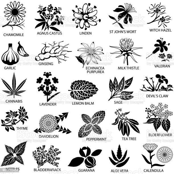 Medicinal herbs icons set vector id931772484?b=1&k=6&m=931772484&s=612x612&h=9eqomsglcqzvu2wb50i tv4sagvoruceve7p 1x50jy=