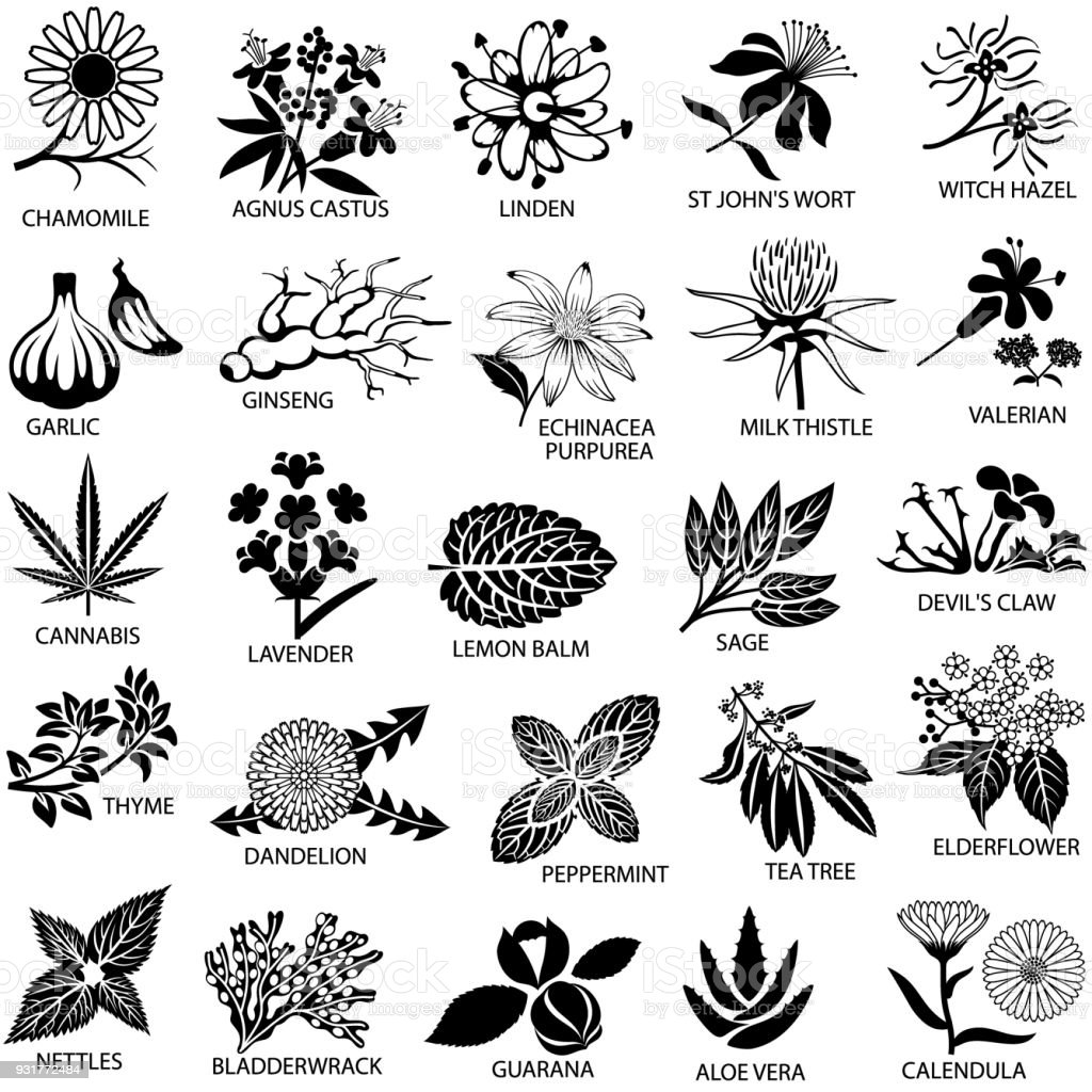 Conjunto de ícones de ervas medicinais - ilustração de arte em vetor