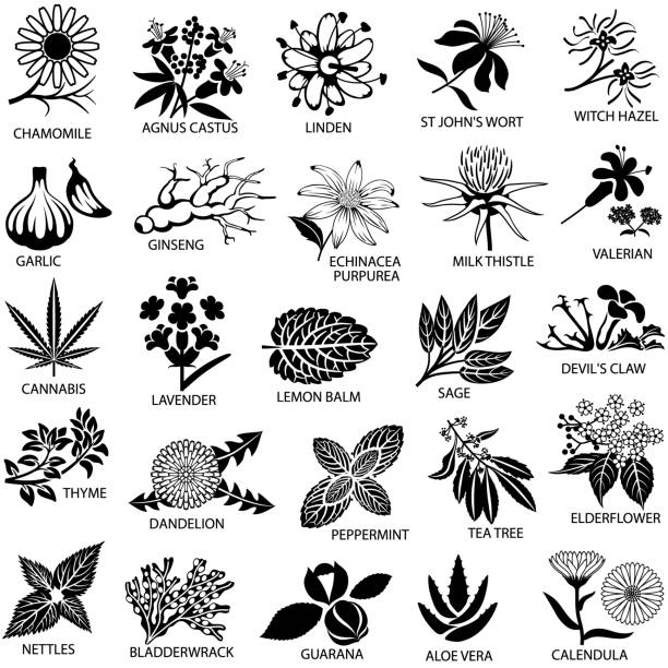 medicinal herbs icons set - лекарственная трава stock illustrations