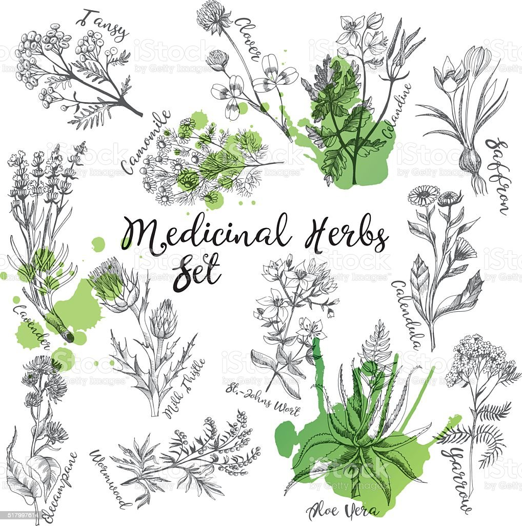 Medicinal herbs vector art illustration