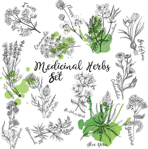 Medicinal herbs Medicinal herbs set chamomile plant stock illustrations