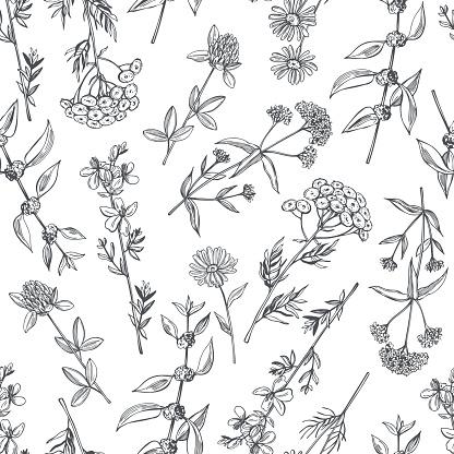 Hand drawn medicinal herbs.  Vector  seamless pattern.