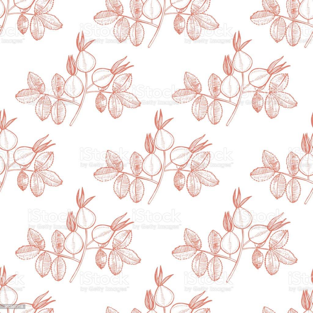 Motif De Rose Musquee 1405 Plante Medicinale 2 Cliparts Vectoriels