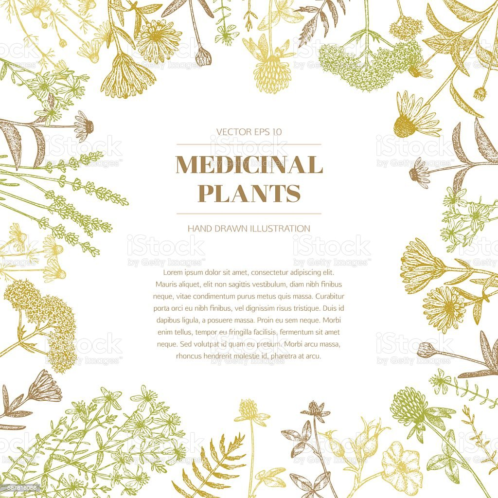 Medicinal plants. vector art illustration