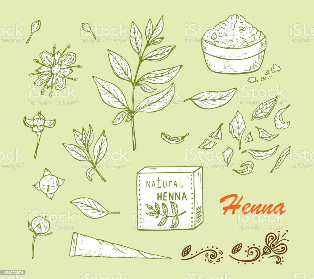 Ilustracao De Plantas Medicinais Vector Set Planta Do Henna Lawsonia