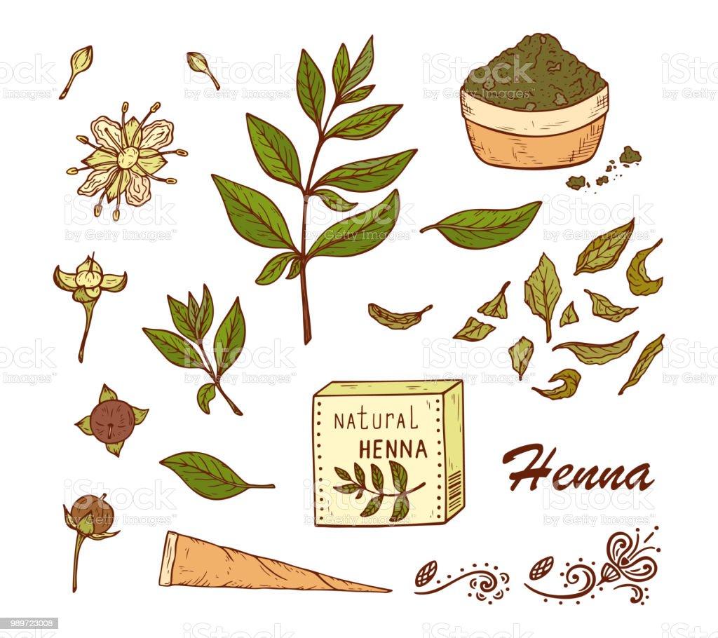 Medicinal Plants Vector Set Henna Plant Lawsonia Inermis Plant