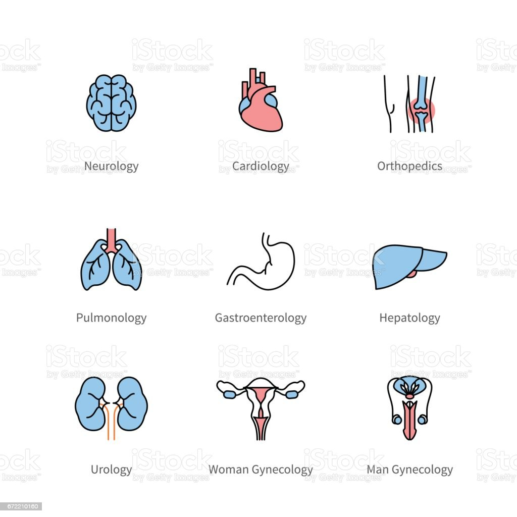 Medicine and medical specialties, human organs vector art illustration