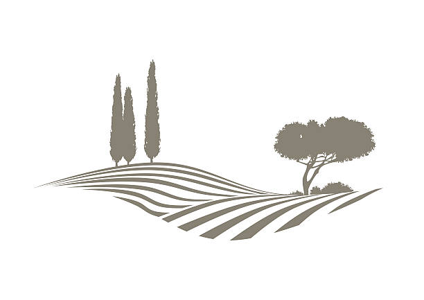 mediterranean vector landscape rural mediterranean vector landscape with plowed fields, cypresses and pine tree agricultural field stock illustrations