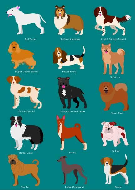 mittlerer hunderassen satz - collie stock-grafiken, -clipart, -cartoons und -symbole