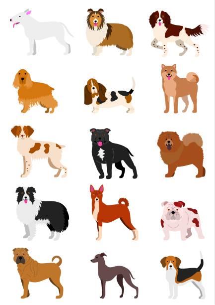 mittlere hunderassen - collie stock-grafiken, -clipart, -cartoons und -symbole