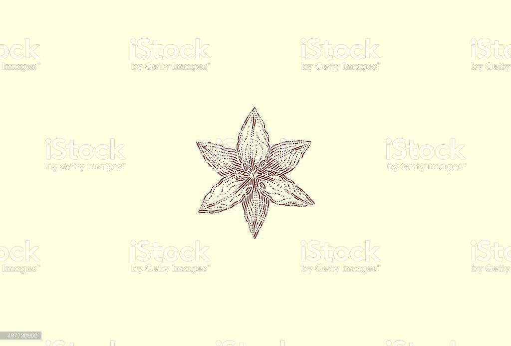Medium lilium vector art illustration
