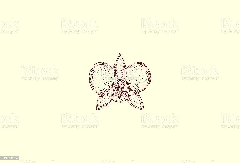 Medium orchid vector art illustration