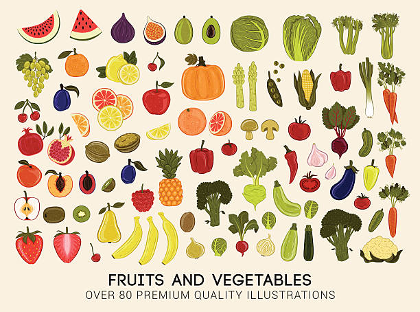Mega collection of vector illustrations of fruits and vegetables Vector set of premium quality illustrations of fruits and vegetables of all seasons. fruit clipart stock illustrations