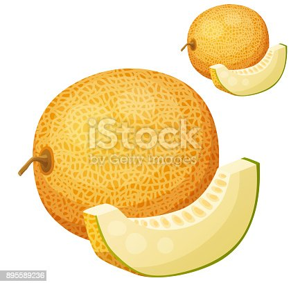 istock Melon. Vector icon isolated on white background 895589236