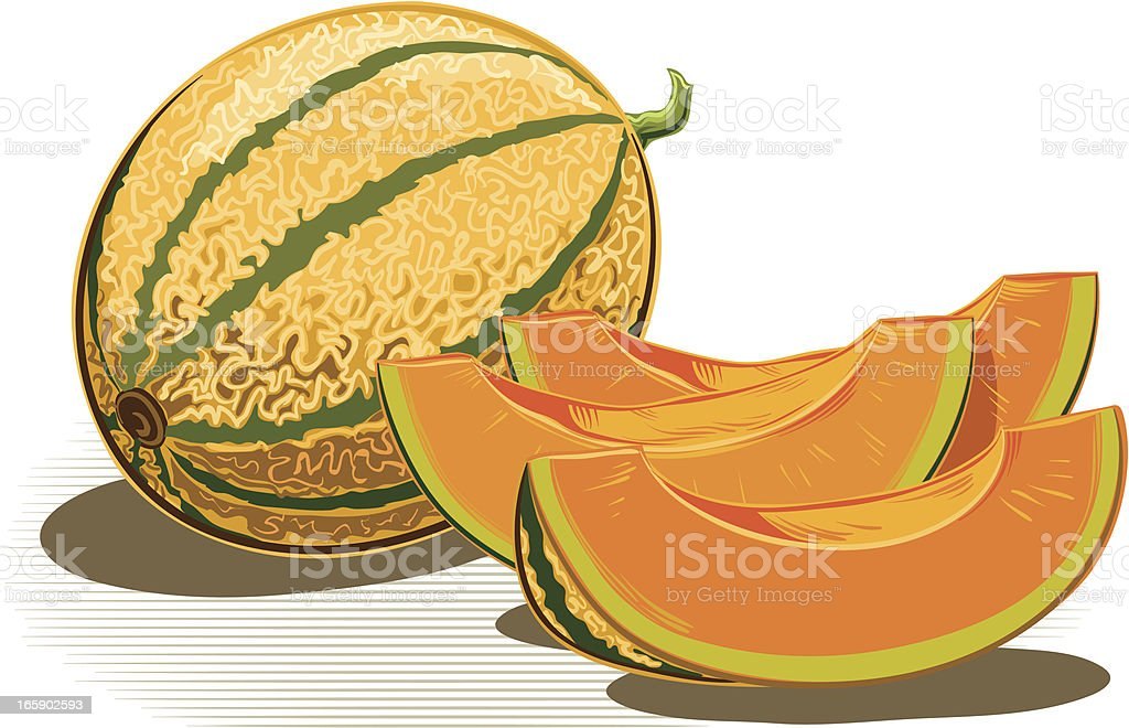 melons vector art illustration