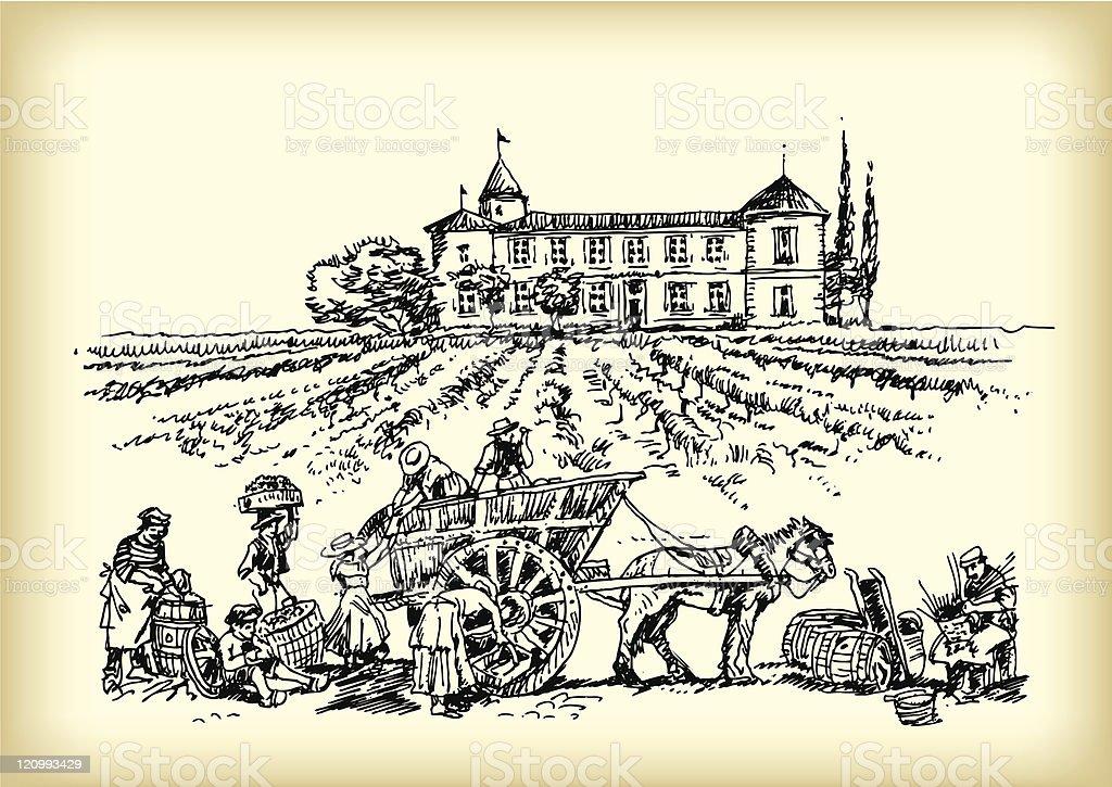 Men working in vineyard vector art illustration