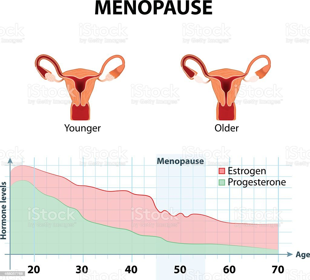 Menopause or climacteric vector art illustration