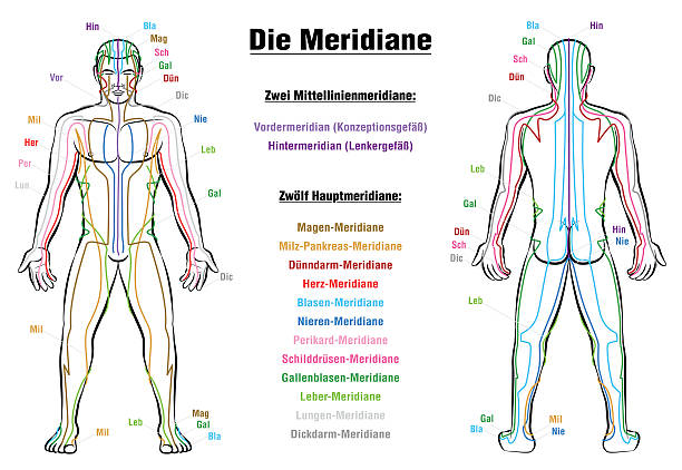 Meridian System Description Chart GERMAN Meridian System Chart - GERMAN LABELING!- Male body with acupuncture meridians, anterior and posterior view. qigong stock illustrations