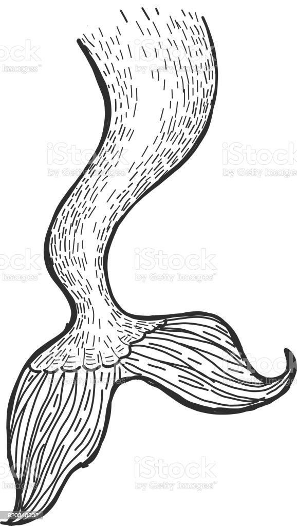 Dibujo de la cola de sirena arte vectorial de stock y for Mermaid tail coloring pages