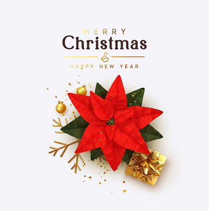 Merry Christmas and Happy New Year. General view flat, flower red Poinsettia flor de Navidad. Symbol Christmas Holiday Flower Star Euphorbia pulcherrima. gift boxes, glitter gold confetti, Xmas ball.