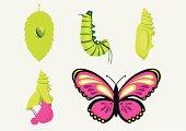 Metamorphosis-Caterpillar into Butterfly