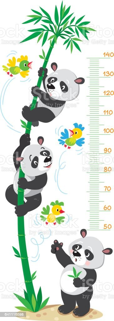 Meter wall with bamboo tree and funny pandas vector art illustration