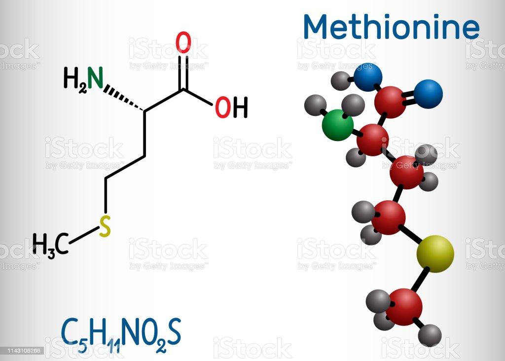Ilustración De Metionina Molécula De Aminoácido Esencial Fórmula Química Estructural Y Modelo De Molécula Y Más Vectores Libres De Derechos De Aminoácido Istock