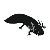 Mexican axolotl icon in black style isolated on white background. Mexico country symbol stock vector illustration.