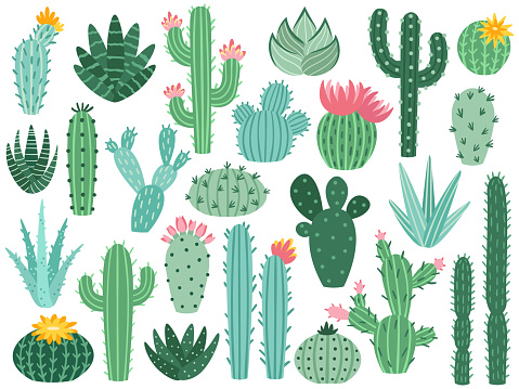 Mexican cactus and aloe. Desert spiny plant, mexico cacti flower and tropical home plants isolated vector collection