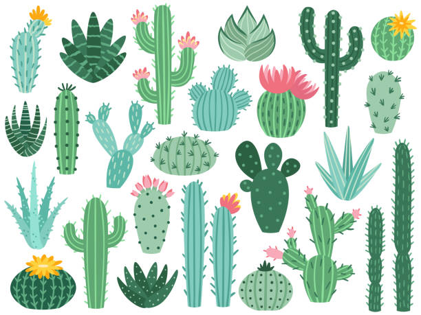 Mexican cactus and aloe. Desert spiny plant, mexico cacti flower and tropical home plants isolated vector collection vector art illustration