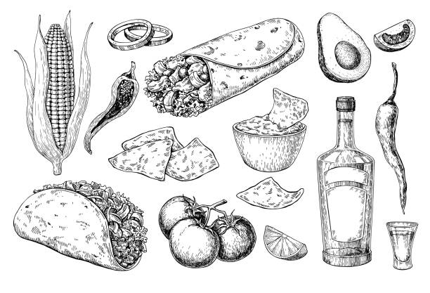 Mexican cuisines drawing. Traditional food and drink vector illustration Mexican cuisines drawing. Traditional food and drink vector illustration. Engraved taco, burrito, nachos and tequila bottle, shot. Hand drawn set. Sketch for restaurant menu, label, banner avocado stock illustrations