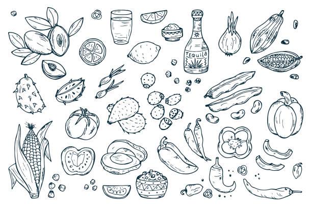 bildbanksillustrationer, clip art samt tecknat material och ikoner med mexico vector set. mexican food. fresh fruits, vegetables, tequila - cactus lime