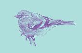 Mezzotint illustration of an American Goldfinch perching