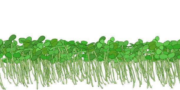 illustrazioni stock, clip art, cartoni animati e icone di tendenza di microgreen sprouts for healthy food. - erba medica