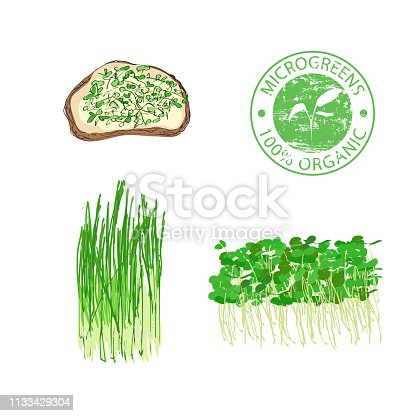 Fresh young sprouts various plants, a microgreen sandwich. Microgreen healthy food. Vegetarian food. Stamp for packaging design. Vector illustration