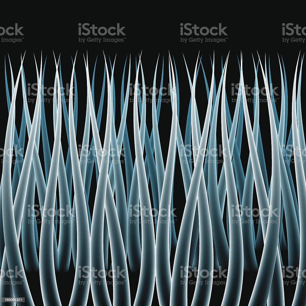 Microscopic Hair vector art illustration