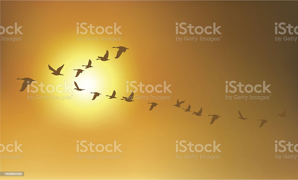 Migration Birds or Geese vector art illustration
