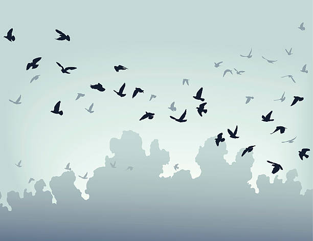 Migration vector art illustration