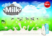 Milk ads. Cows on green field farm vector background