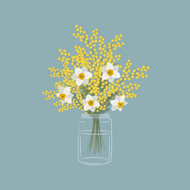 Mimosa and daffodils in a glass jar. Yellow and white flowers with leaves. Spring flowers vector art illustration