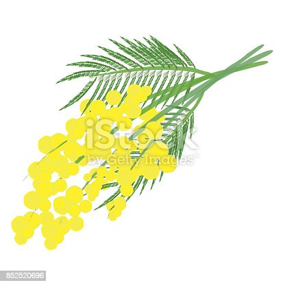 istock Mimosa for Women's Day 852520696