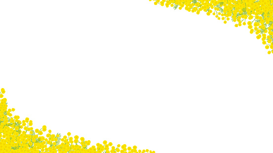 Mimosa hand drawn vector frame. / white background