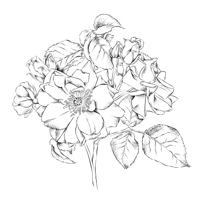 Mini Rose Pen and Ink Drawing. Vector EPS10 Illustration