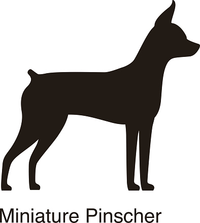 Miniature Pinscher dog silhouette, side view, vector