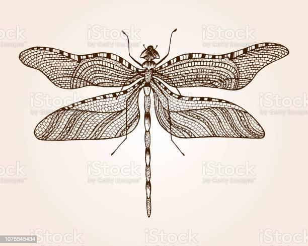 Minimalist elegant dragonfly logo design with line art style vector id1075545434?b=1&k=6&m=1075545434&s=612x612&h=b4d40la5nregjceda1k7pjggosi kubctuongvcdgrm=